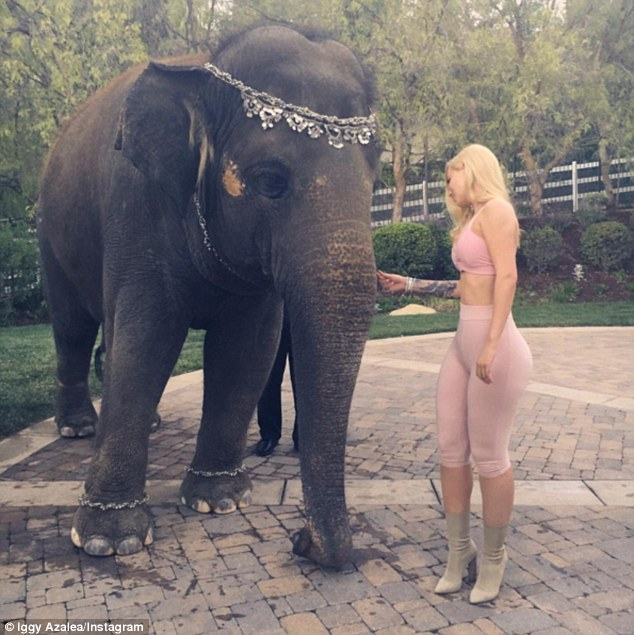 Junk in the trunk! Iggy is criticised by animal rights supporters for posing with an elephant at French's birthday