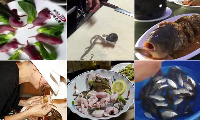 World's cruelest dining experiences revealed