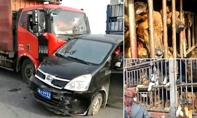 Chinese pet rescue team use a car to block lorry full of animals headed for