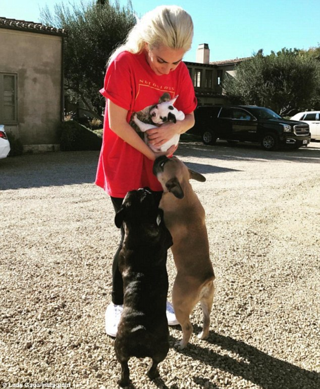 Adorable: She shared a photo of her dogs meeting her new pup on Instagram