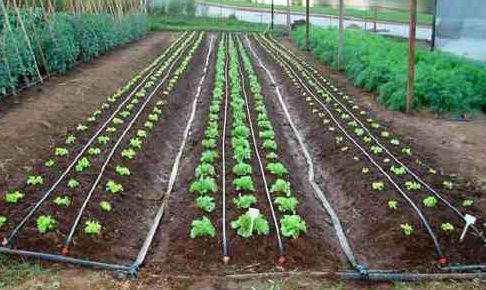 irrigação por gotejamento na horta