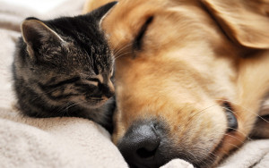 Old-Dog-and-Sleeping-Kitten