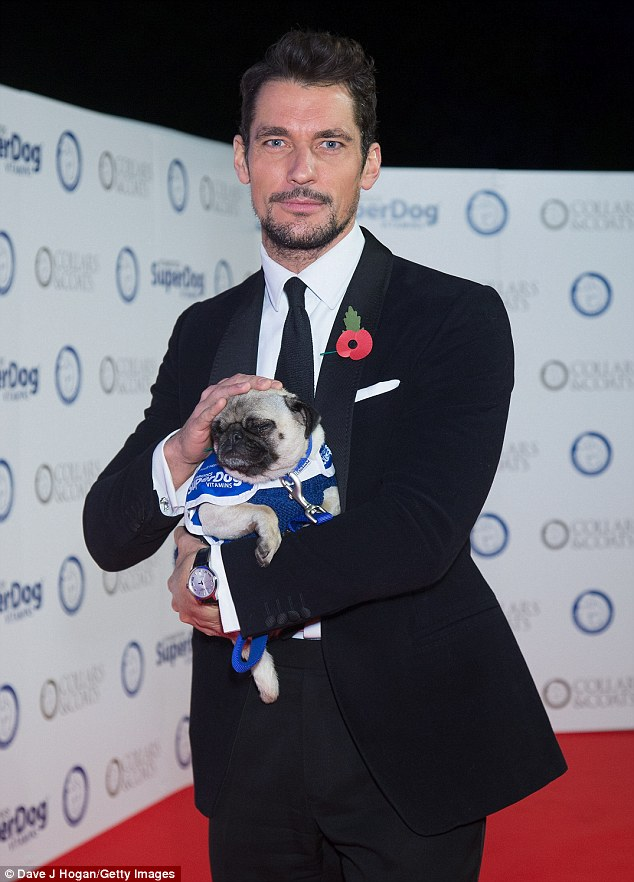 The magic touch: David Gandy clearly had a hypnotic effect his new pug friend
