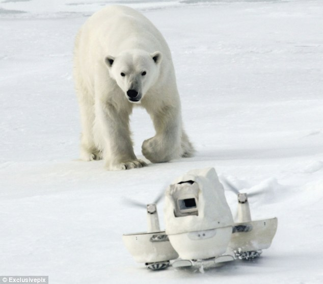 Chase me: The bear sets his sights on the mobile blizzard camera
