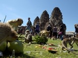 "Macaques eat fruit at an ancient temple during the annual ""monkey buffet"" in Thailand's Lopburi province, north of Bangkok on November 27, 2016 ©Tang Chhin Sothy (AFP)"