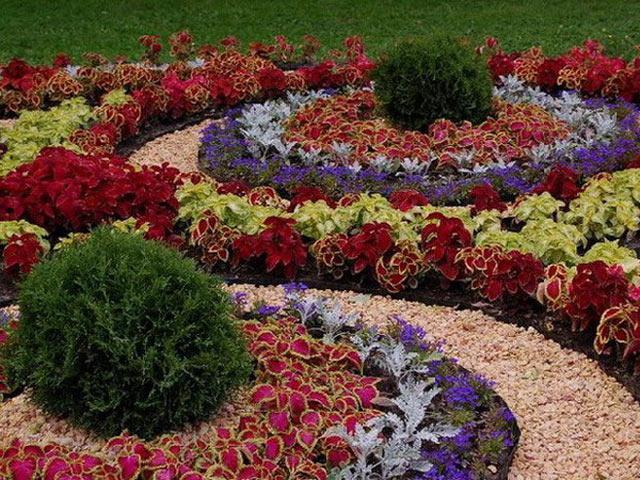 cvety - Красивые миксбордеры в саду и их фото