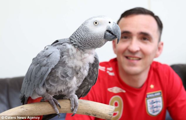 After a week of his parrot's England chanting, Mr Sheridan says the trick is beginning to wear a little thin