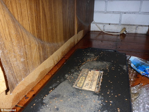 Josh Marsden said floorboards are often ripped up due to rotten food and maggots