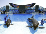 FILE - In this April 10, 2014, file photo, SeaWorld trainer Ryan Faulkner, left, with killer whale Melia, and Michelle Shoemaker, right, with Kayla work on a routine for a show at the Orlando, Fla., theme park. SeaWorld Parks & Entertainment is partnering with a United Arab Emirates company to build a theme park in Abu Dhabi in what will be the first SeaWorld park outside the United States and without orcas.  Officials with SeaWorld and Abu Dhabi-government-backed Miral Asset Management said Tuesday, Dec. 13, 2016, that the SeaWorld park will open in 2022 in Abu Dhabi¿s Yas Island, a man-made island that is fast becoming a tourism and entertainment center. (AP Photo/John Raoux, File)