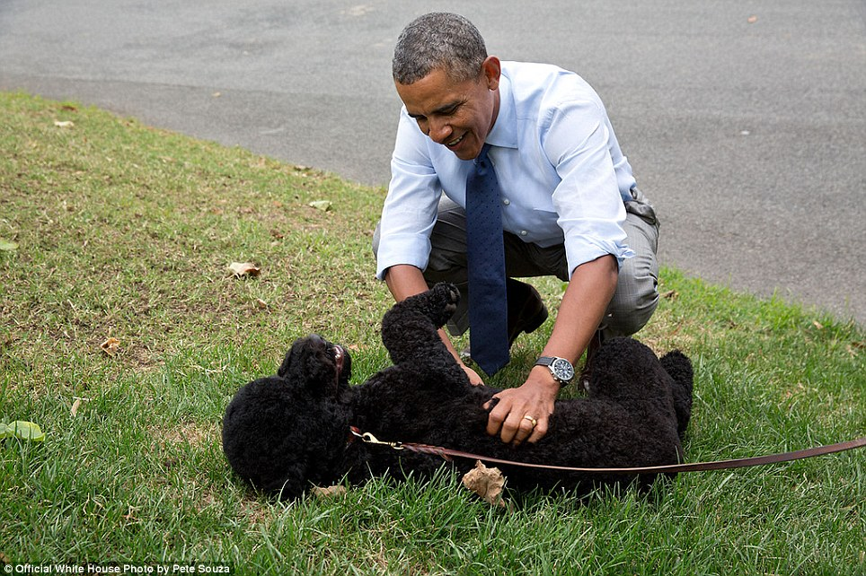 'The President plays with Sunny, the new Obama family pet, on the South Lawn on Sunny's first day at the White House'