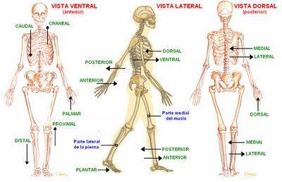 Posición-anatómica-vistas