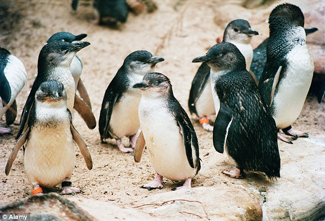 Authorities are appealing to the public to come forward with information about the stolen penguin. They want to know what has happened to it, 'dead or alive.' They assure those involved that 'no one is in trouble.'