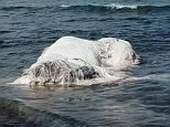 A huge, hairy mysterious sea creature has washed up on a beach in the Philippines