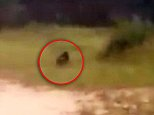 A group of Argentinian children have been left too terrified to play football after they believe they spotted a goblin on their pitch