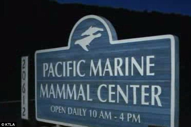 Fifteen of the marine mammals have been diagnosed with varying degrees of corneal ulcerations