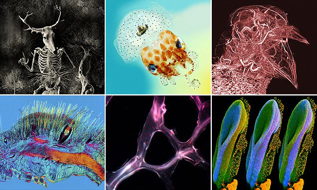 Wellcome Trust announces winners of its 2017 Image Awards