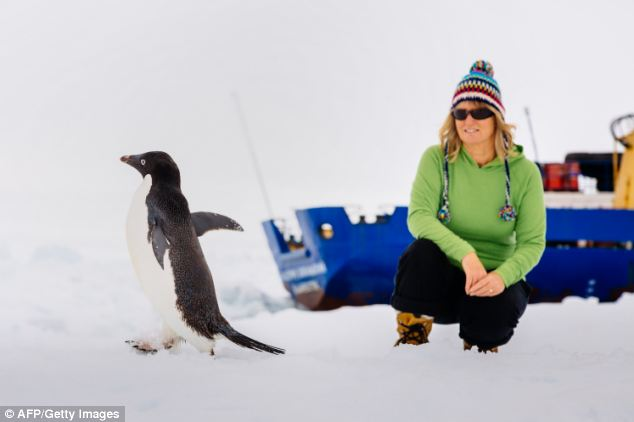 Barbara Tucker, a passenger on Russia's Academic Shokalskiy, is pictured watching an adelie penguin
