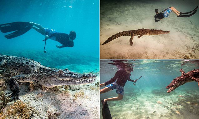 British 14-year-old swims with crocodiles for his birthday