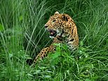 A leopard joins birds, stray cattle and dogs on the list of animals that have disrupted flights at Kathmandu aiport