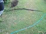 A Reddit user in Queensland shared pictures of a two-metre long snake he found in his backyard on Wednesday morning