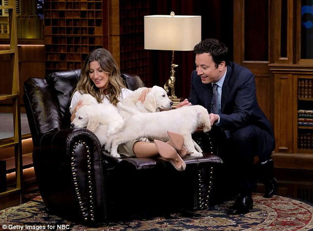 Fun on set: Gisele and host Jimmy Fallon couldn't keep their hands off the cute pups