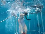 Docile: Lemon sharks are not known to attack humans but still can reach 11ft in length and have sharp teeth
