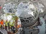 The three spheres - the tallest of which is 90ft tall and 130ft in diameter - are part of a $4billion effort by Amazon to build a campus in Seattle, Washington