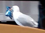The brazen bird was spotted swaggering into a Greggs store in South Shields, Tyne and Wear