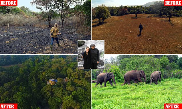 Couple in India spend 26 years replanting a rainforest