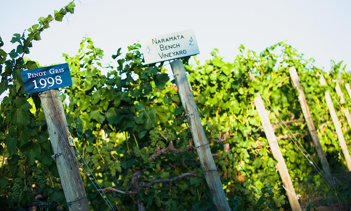 Naramata Bench Vineyard