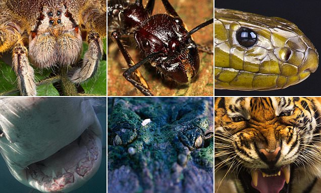 Close-up photos capture the world's most fearsome animals