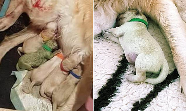 Dog gives birth to a GREEN puppy