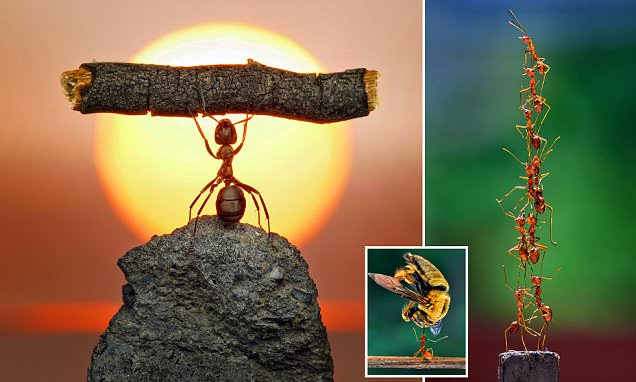What the humble ant can teach us humans