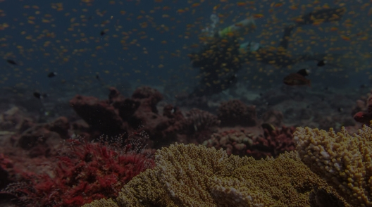 While at Jarvis in 2017, researchers surveyed these coral reef communities and assessed the recovery potential from the thermal stress that caused the coral to bleach.