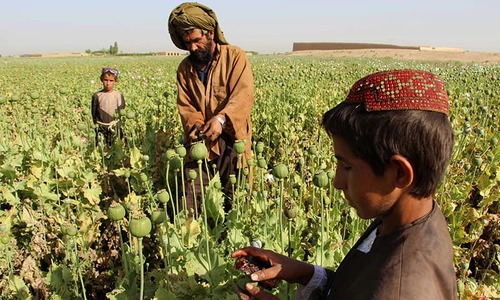 From poppy to heroin: 'Taliban moving into Afghan drug production'