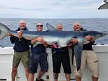 Weighing in at 18 stone, this is the biggest blue shark to ever be found in British waters, and was caught by an amateur angler and his three mates off the Cornwall Coast