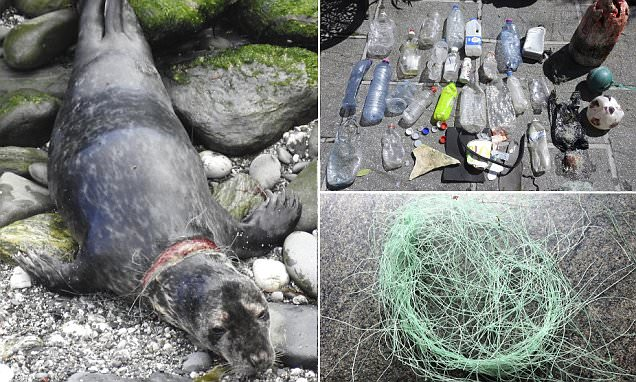 Seal seriously injured after getting caught in trash