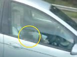 The man is seen in the video with both hands on the wheel and his female companion's head in his lap (circled)