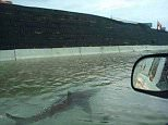 An influx of hoax photos have surfaced ever since Hurricane Harvey wreaked havoc on Houston at the weekend, including this shot of a shark swimming on a highway