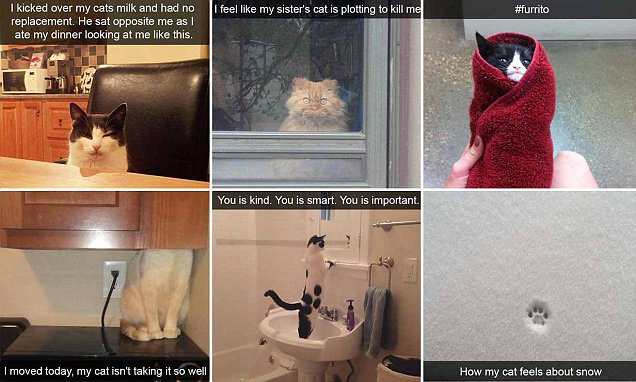 Cat owners share hilarious Snapchats of their pets