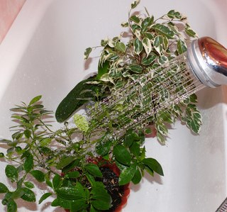 xuu SSHzNn0 - Горячий душ для растений
