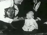 In the chilling experiment, the psychologists make loud noises every time the baby touches one of the animals he is interested in. Here, the child shakes hands with a dog, before he is made to fear it
