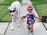 Echo, the deaf and visually impaired Great Dane, out for a walk with 17-month-old Jennie