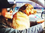 Moving in? Meghan Markle and one of her dogs pictured in a parked Audi; the actress has cancelled her ¿VIP¿ contract with Audi North America several months early