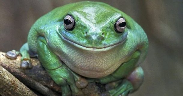 PROOF! Gay Frogs Are Real: Alex Jones Was Right