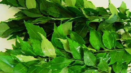 beautiful fresh curry leavs:
