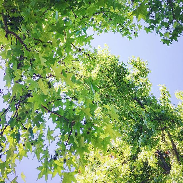 Trees overhead during an afternoon picnic. 🌿🍽 #366 #photoaday
