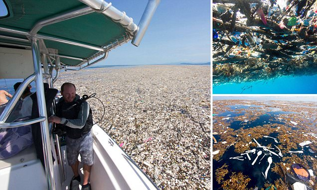 Caribbean oceans are choked by plastic bottles and rubbish