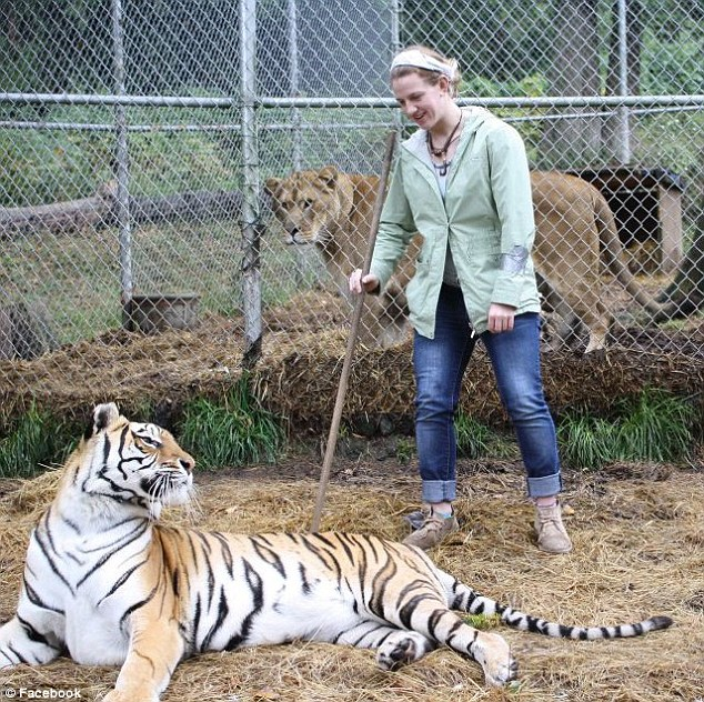 Care giver: Ms Hanson started her six-month internship at the cat sanctuary in January, seen here with one of the tigers