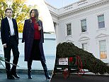 First son Barron Trump, who's grown taller than his mother in heels, surveys the Wisconsin-grown Christmas tree arriving at the White House Monday afternoon